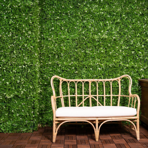 hedge photography background